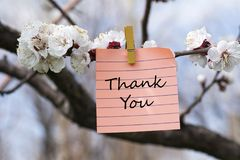 Thank you in memo. Pined on tree with blooms Stock Photo
