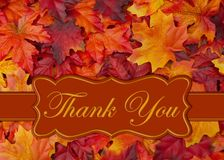 Thank you message with fall leaves. Thank You message on orange and red fall leaves on a banner royalty free stock photography