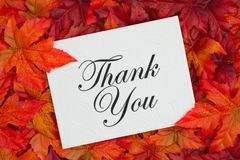 Thank You greeting card on fall leaves. Thank you message, Some fall leaves and a embossed white greeting card with text Thank You stock image