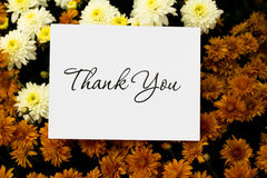 Thank You Note. A close up of fall coloured mum flowers with a thank you card, thank you note Stock Image