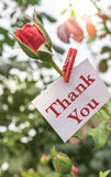 Thank You. Note on a rose in the garden Royalty Free Stock Photo