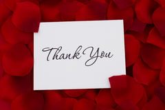 Thank You Note. A white thank you card with a red rose pedal backgrounds Royalty Free Stock Photos