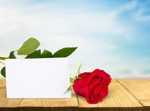 Thank you. Valentine`s day greeting card flower single flower rose day Royalty Free Stock Photos