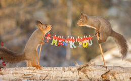 Thank you too. Close up of red squirrels standing with poles of a clothesline with the text thank you royalty free stock photography