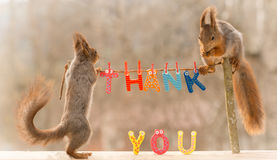 Thank you too. Red squirrel standing on tree sticks with a line with the words thank you Stock Photos
