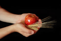 Thankful. Palms with apple and cereals isolated on black royalty free stock image