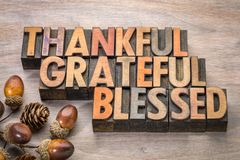 Thankful, grateful, blessed - Thanksgiving theme. Word abstract in vintage letterpress wood type with acorn and cone decoration Royalty Free Stock Image