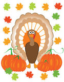 Thankgiving turkey Stock Images