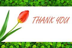 Greetings. Thanks giving greetings with lotus leaf background Royalty Free Stock Photos
