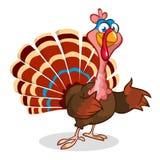 Thanksgiving turkey mascot waving Stock Images