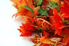 Thanksgiven Dekoration - Ahornholzblätter mit Mais Lizenzfreies Stockfoto
