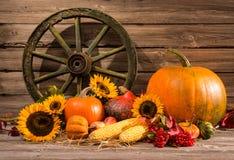 thanksgiving Photo stock