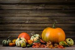 thanksgiving Fotos de Stock