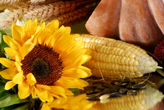 Thanksgiving. Corn, sunflower and pumpkin on a mirrow Stock Photography