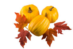 Thanksgiving. Decorations with pumpkins and fall leaves decor, isolated on white with clipping path royalty free stock image
