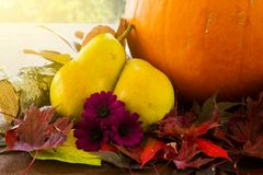 Thanksgiving or autumn arrangement of pears, pumpkin and flowers Stock Photos