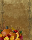 Thanksgiving Autumn Fall Background Stock Photo