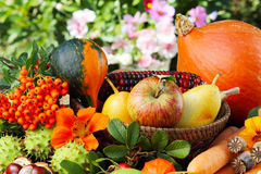 Thanksgiving, autumn fruits. And blossoms Royalty Free Stock Image