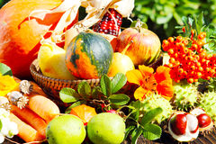 Thanksgiving, autumn fruits. In the garden Stock Images