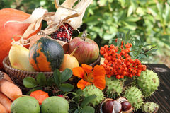 Thanksgiving, autumn fruits. On garden table Royalty Free Stock Images