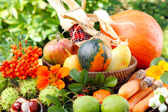 Thanksgiving, autumn fruits. And plants Stock Photography