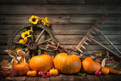Thanksgiving autumnal still life with pumpkins Royalty Free Stock Photography