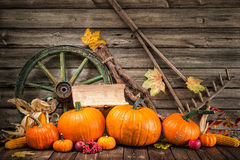 Thanksgiving autumnal still life with pumpkins Royalty Free Stock Images
