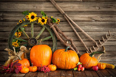 Thanksgiving autumnal still life with pumpkins Stock Photos