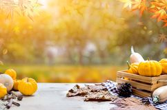 Thanksgiving background in autumn and fall. Thanksgiving with fruit and vegetable on wood in autumn and Fall harvest cornucopia season royalty free stock images