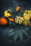 Thanksgiving background with autumnal squash, gourds and cannabis leaf royalty free stock photography
