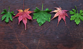 Thanksgiving background with colorful maple leaf. On wood background, nice leaves in autumn season Royalty Free Stock Photos