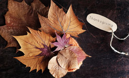Thanksgiving background with dried maple leaf. On wood background, nice leaves in autumn season Stock Image