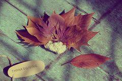 Thanksgiving background with dried maple leaf. On wood background, nice leaves in autumn season Royalty Free Stock Image