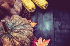 Thanksgiving background with fruit and vegetable. On wood in autumn season.  Copy space for text Stock Images
