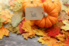 Thanksgiving Background Royalty Free Stock Photos