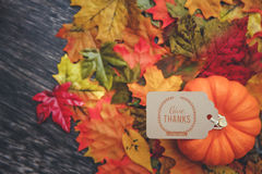 Thanksgiving Background. Thanksgiving holiday Background with leaves Royalty Free Stock Photo