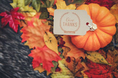 Thanksgiving Background. Thanksgiving holiday Background with leaves Stock Images