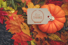 Thanksgiving Background Royalty Free Stock Images