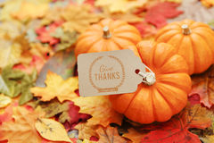 Thanksgiving Background Stock Photo
