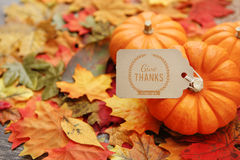 Thanksgiving Background. Thanksgiving holiday Background with leaves Royalty Free Stock Photos