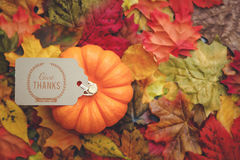 Thanksgiving Background. Thanksgiving holiday Background with leaves Stock Image