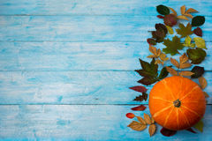 Thanksgiving background with leaves and orange squash on blue Royalty Free Stock Image