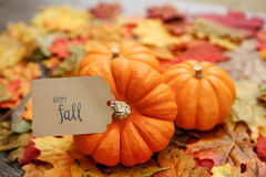 Thanksgiving background. With Leaves and Pumpkins Royalty Free Stock Images