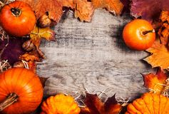 Thanksgiving Background with orange pumpkins and leaves on wooden table. Thanksgiving Day autumn Card. Flat lay. Copy space stock photography