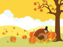 Thanksgiving background. Pumpkin field with a thanksgiving turkey Royalty Free Stock Images