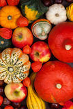 Thanksgiving background with pumpkins Stock Image