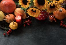 Thanksgiving background with pumpkins. Candles and sunflowers, Autumn decor royalty free stock image