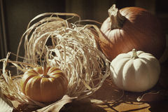 Thanksgiving Background with Pumpkins. Retro card Stock Images