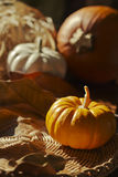 Thanksgiving Background with Pumpkins. Retro card Royalty Free Stock Image