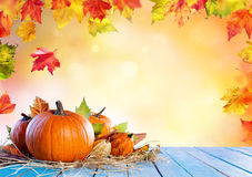Thanksgiving Background - Pumpkins On Wooden Plank royalty free stock images